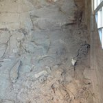 wall of fossils in Gallery Room