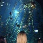 Tall seaweed tank