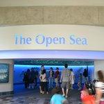 The Open Sea - Entrada
