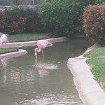Flamingos on view