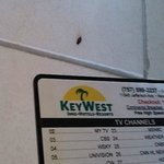 Eww!  A dead bug!