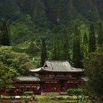 Lush, green mountain view