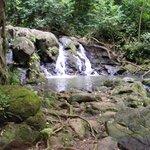 Judd Trail/rainforrest