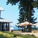 View of tasting room looking over umbrellas and outdoor seating