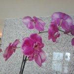Orquídeas na decoração!