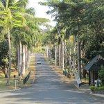 Tanoa driveway