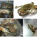 Our weekly special: Giant Crab