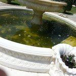 Fontaine avec poissons