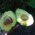 found some avocados