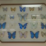 pretty butterfly display