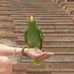 Lovely birds...