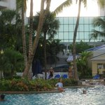 lots of palm trees around the pool