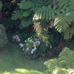 The Lovely Gardens #2