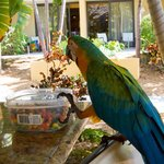 Mango the Parrot