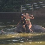 Loved bathing the elephants!
