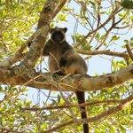 Tree kangas hanging about