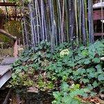Seating among tall bamboo