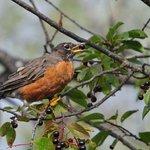 bird photography opportunities
