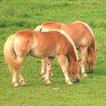 horses park