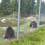 Il pasto degli orsi