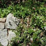 Plantes grasses dans les rocailles