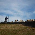 Campos con ovejas