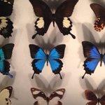 Galerie des papillons