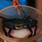 Choix du crabe avant le repas !