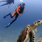 My dive buddy and I with a turtle at Shark Point!