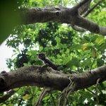Monkeys seen on trail walks