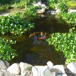 Relax by the koi pond with triple waterfall