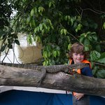 Close encounter with a monitor lizard