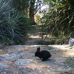 Black Rabbit in the Botanical Garden