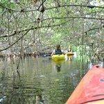 Mangroventunnel Everglades