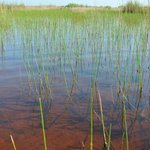 Grasland Everglades