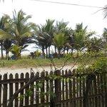Vista al mar y los arboles de Hostal Baloo