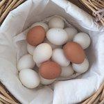 Les poules viennent de se délester :)