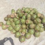 Muitos cocos na areia