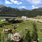 Horses and Cows - view from our room