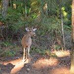 Deer feeding at Wildwood Manor