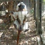 Accessibilité des animaux (barrière de protection cassée)