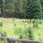 Elk seen along the trail