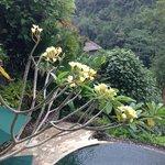 バンガローには、プライベートプールがついていました。