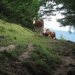Typical Tirol.