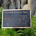 Famous Banyan Tree.