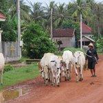 sights of Siem Reap