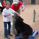 Feeding the Cubs
