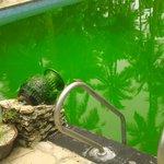 Green slime pool