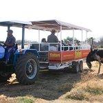 Tractor Tour at #Safari Ostrich Farm