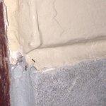 Beaucoup de fourmis dans la salle de bain. Un nid dans le cadre de porte.